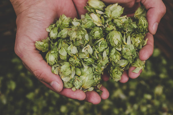 Top 5 Tips for Dry Hopping Your Home Brew