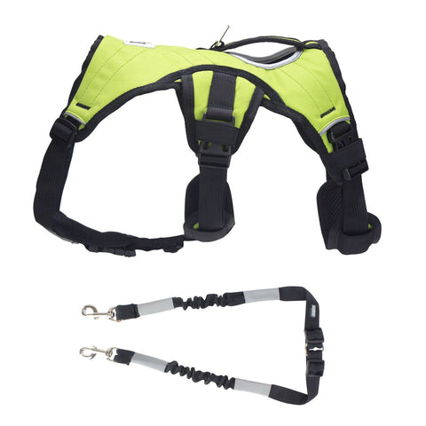 Side view of green dog training harness and dog pulling leash