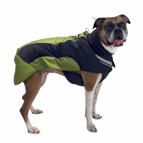 Side view of dog wearing winter jacket (green)