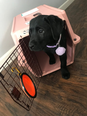 dog in crate for airline