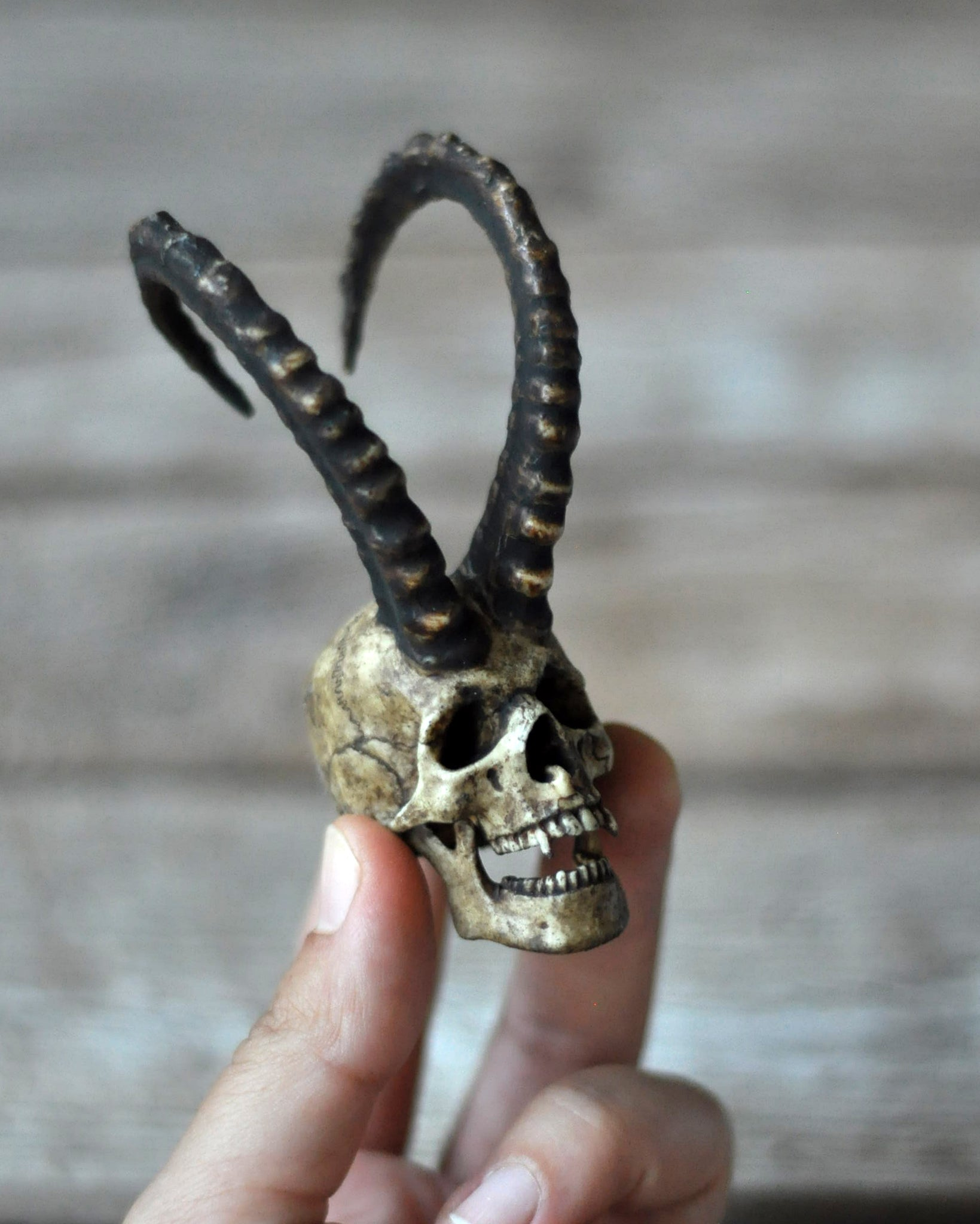 High Detailed Realistic Capricorn Horned Vampire Goat Horned Human Skull, Miniature Skull Art, Gothic Style Decorative Art Object