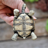 Turtle Decorative Item with an Aragonite Crystal