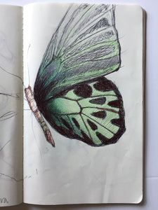 Butterfly Mixed Media Drawing