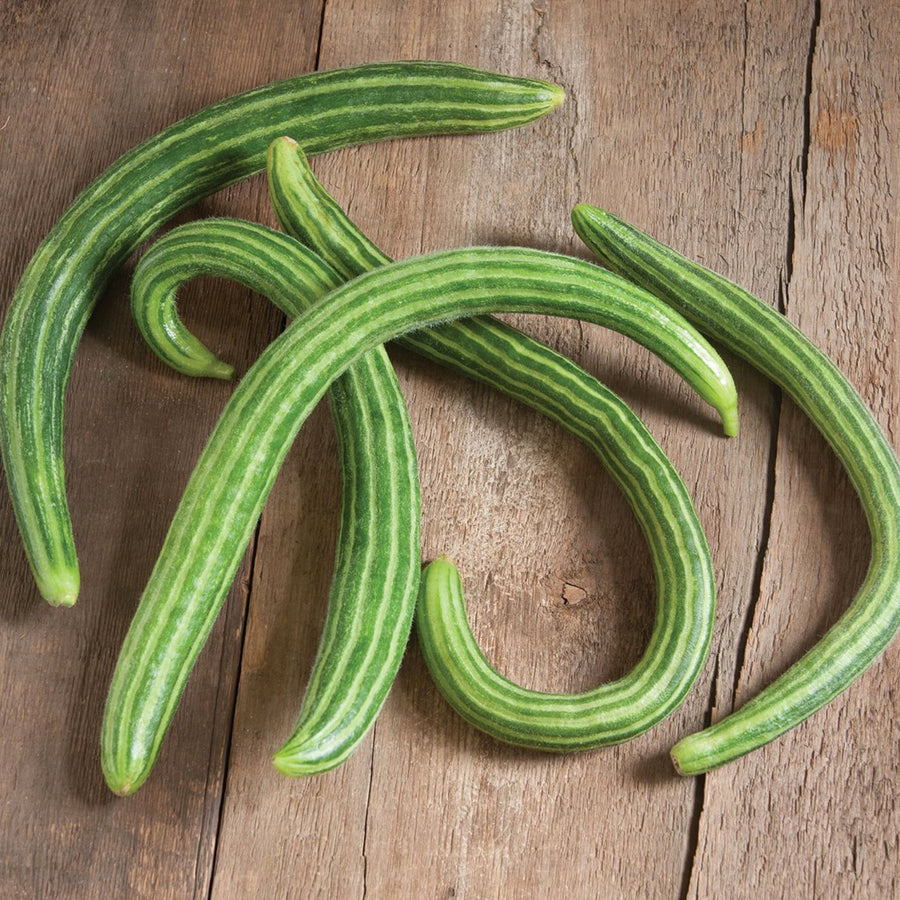 Organic Painted Serpent Cucumber