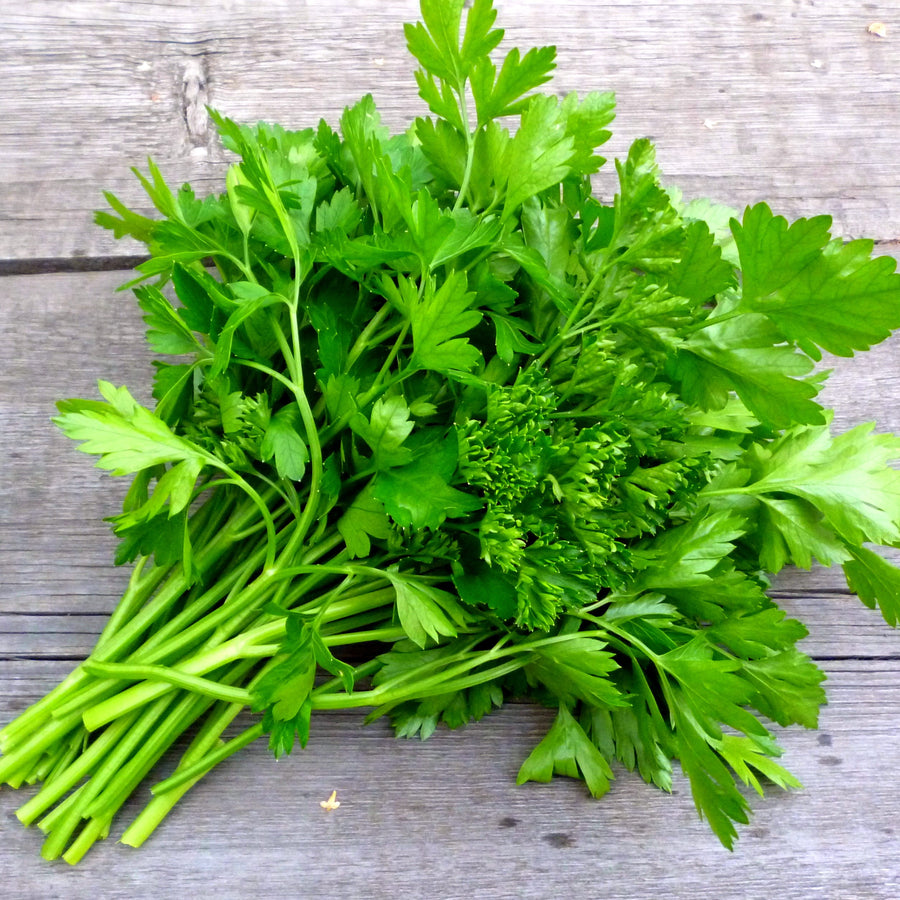 Organic Italian Giant Parsley