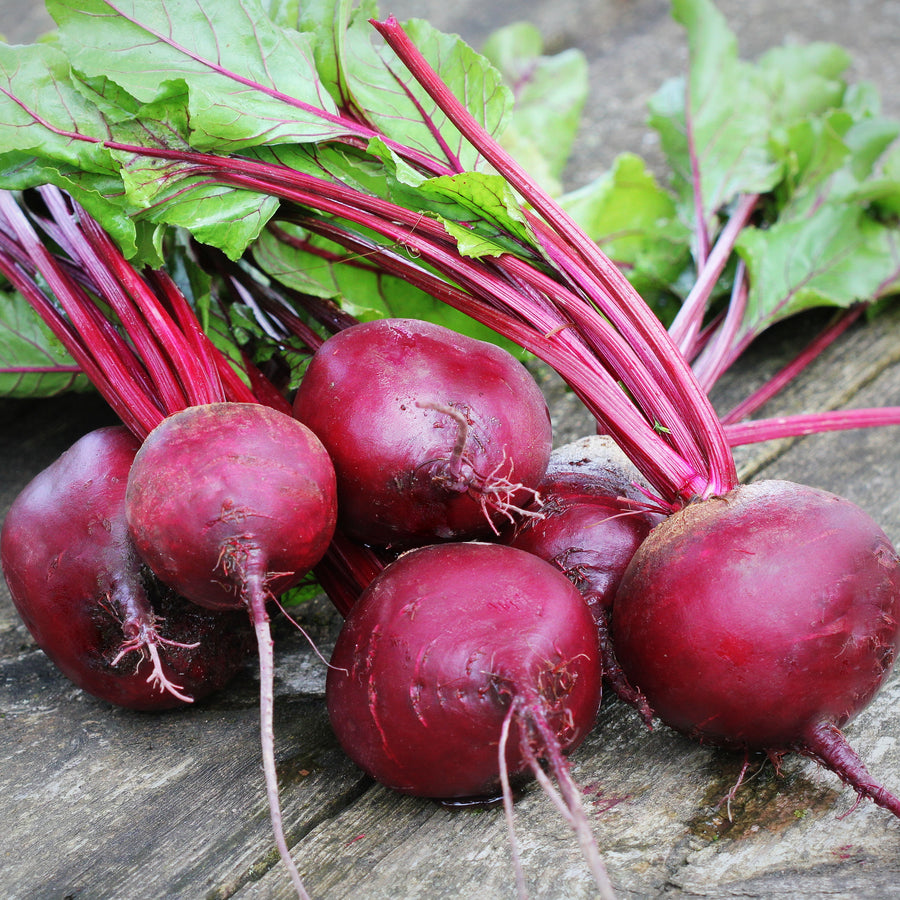 Organic Detroit Dark Red Beet