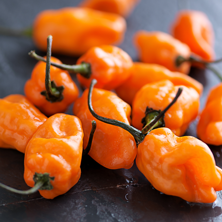Organic Habanero Orange Pepper