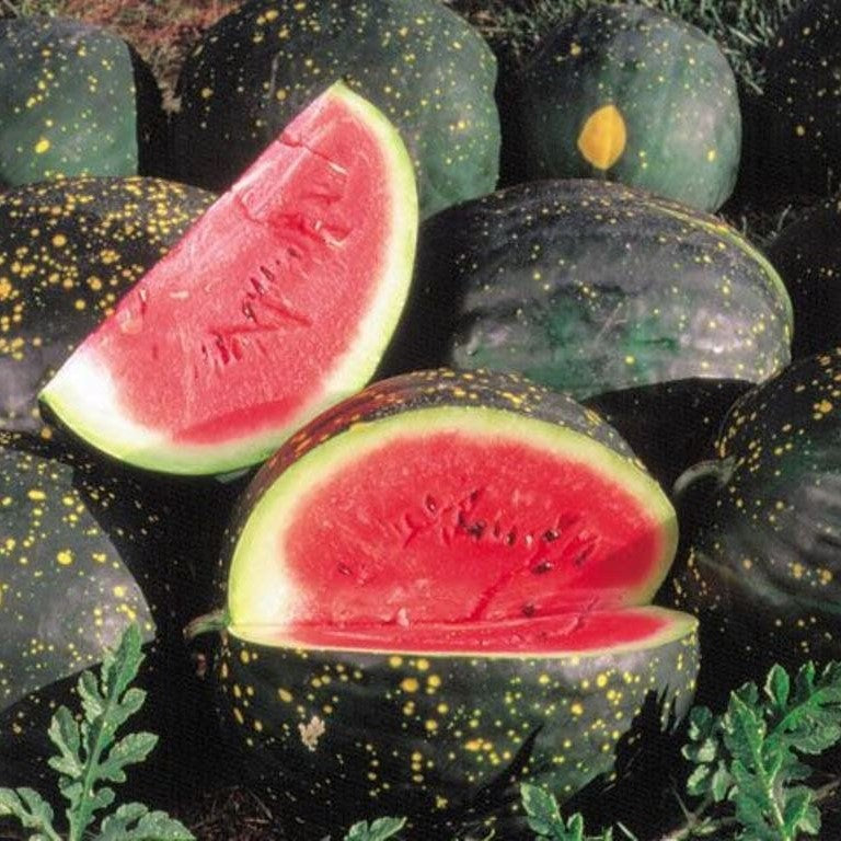 Organic Moon And Stars Red Flesh Watermelon