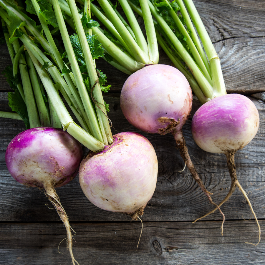 Organic Purple Top White Globe Turnip