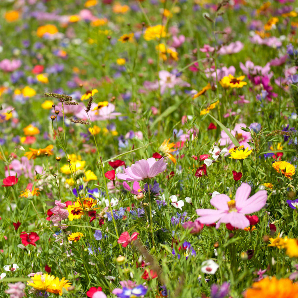 All Annual Quick Blooming Wildflower Seed Mix