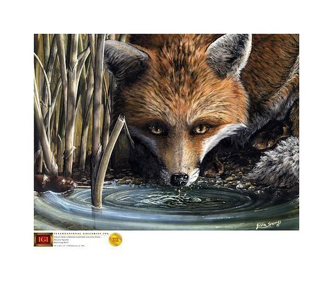 "Fox At The Watering Hole  23.5"" x 18"""