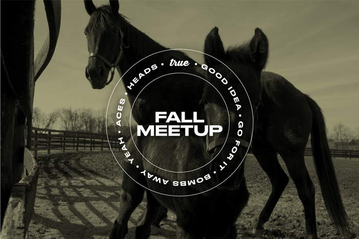 People's Horse Fall Meetup (For Guests)