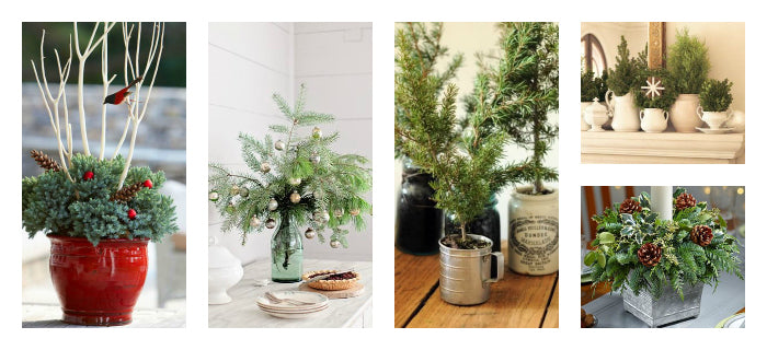 DIY Spruce Tip Planter Bar | Evergreen Centerpieces | Holiday Centerpiece
