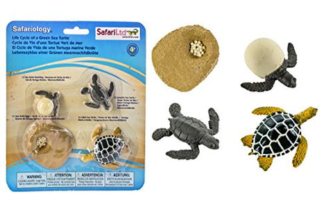 Safari Ltd Life Cycle of a Green Sea Turtle
