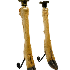 Antelope Hoof Candle Stick Holders