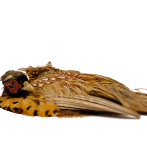 Taxidermy Pheasant