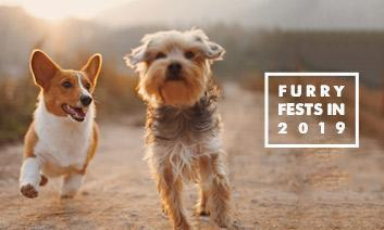 Our Fav Furry Fests in 2019