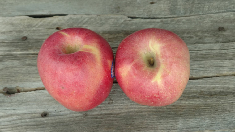 Organic Pacific Rose Apples (/lb)