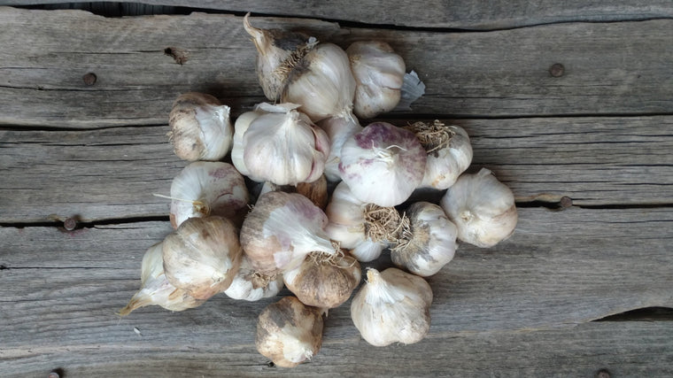 Zach's Garlic (/lb)