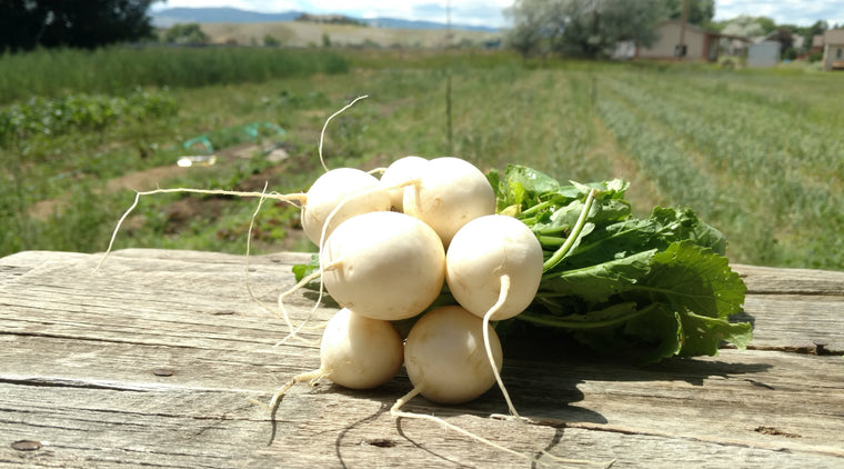 Zach's Salad Turnips (/bunch)