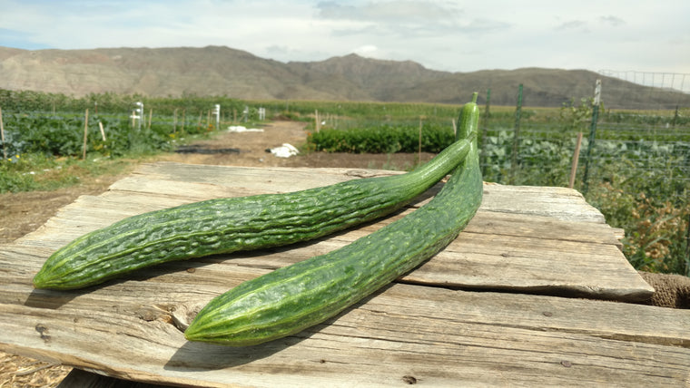 Scott's Cucumbers: English (/lb)