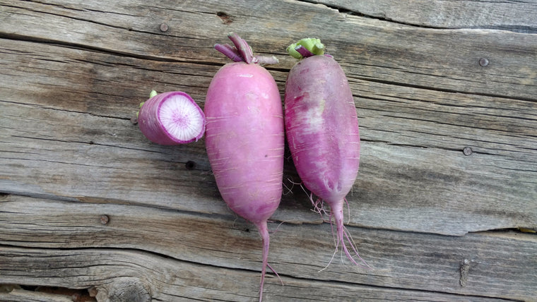 Terri & Lloyd's Radishes: Purple Daikon (/lb)