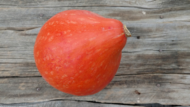 Terri & Lloyd's Squash: Red October