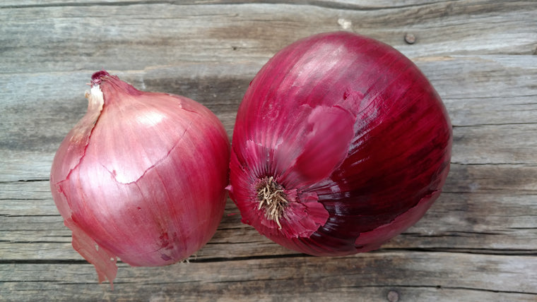Terri & Lloyd's Onions: Red Candy Sweet (/lb)