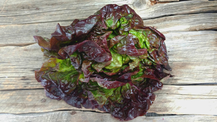 Organic Red Butter Lettuce (/head)