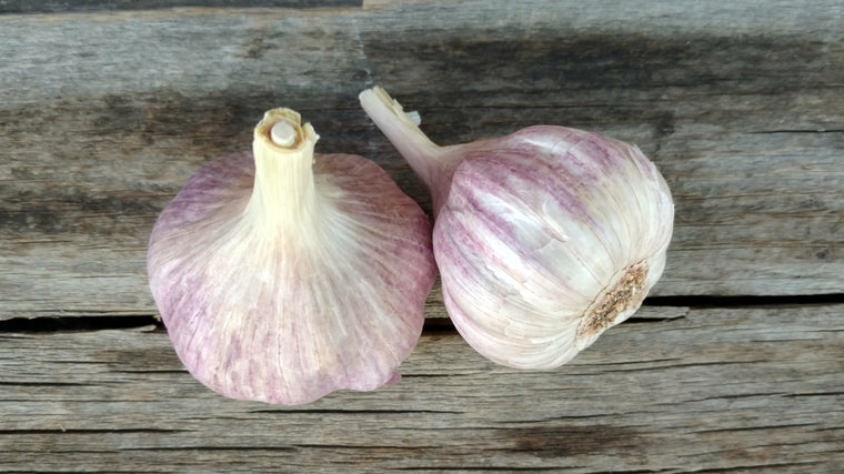 Organic Purple Garlic (/head)