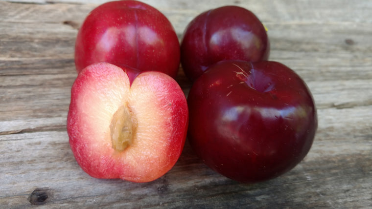 Organic Red Plums (/lb)