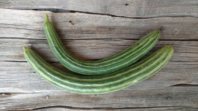 Terri & Lloyd's Cucumbers: Striped Armenian (/lb)
