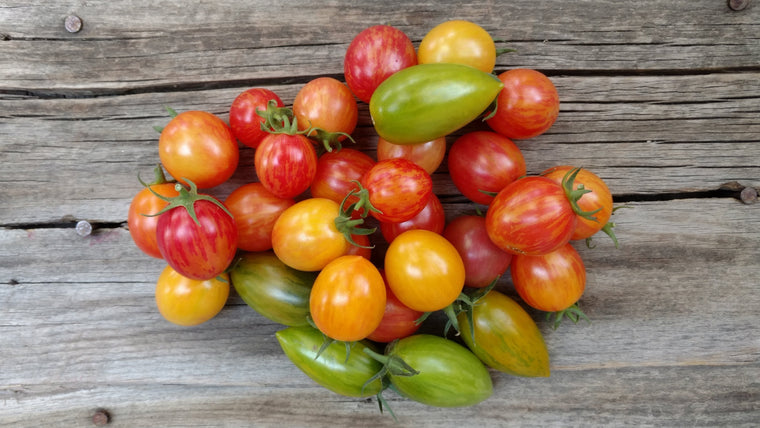 Terri & Lloyd's Tomatoes: Heirloom Cherry (/lb)