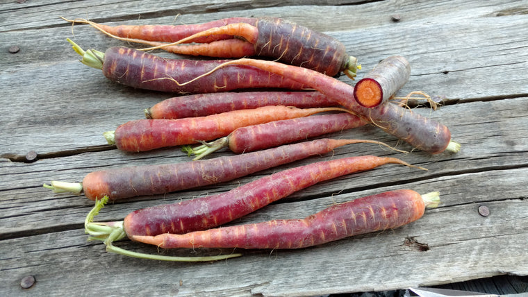 Terri & Lloyd's Carrots: Purple Haze (/lb)