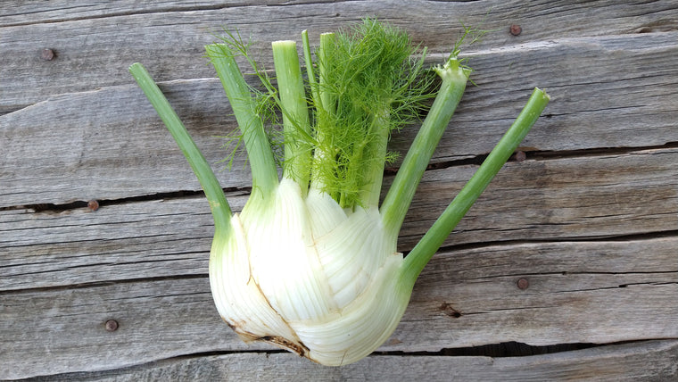 Scott's Fennel  (/bulb)