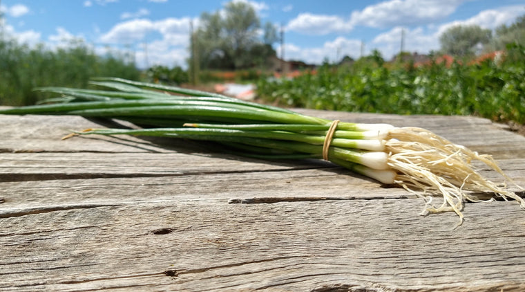 Zach's Scallions (/bunch)