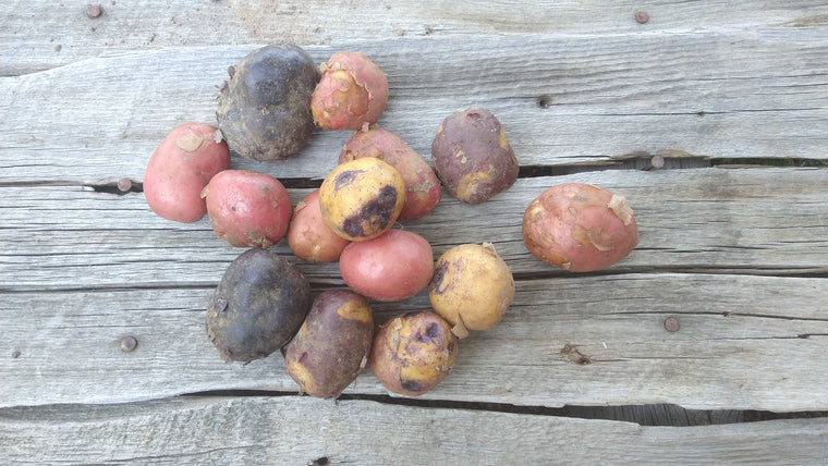 Bonnie's New Potatoes (/lb)
