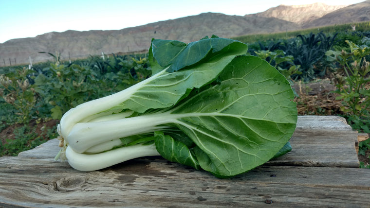 Scott's Bok Choy (/head)