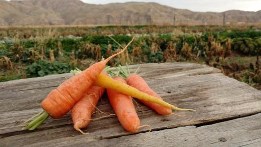 Scott's Carrots: Topless (/lb)