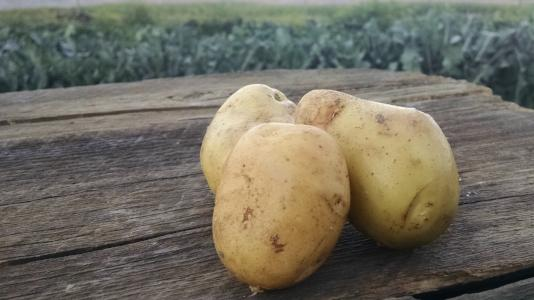 Scott's Potatoes: Yukon (/lb)