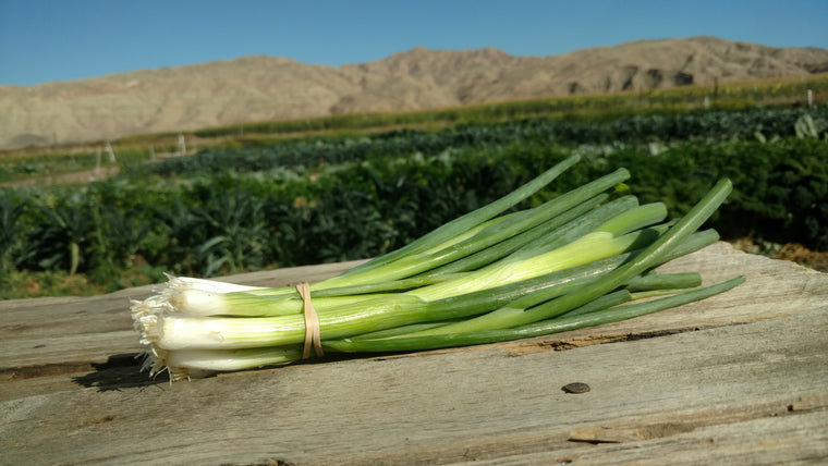 Scott's Scallions: Green (/bunch)