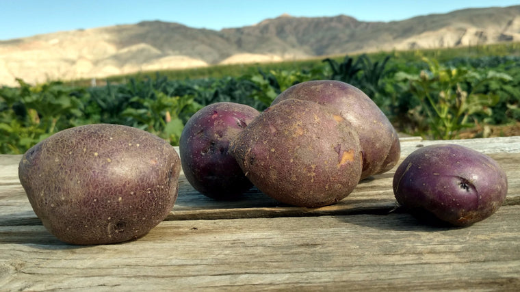 Scott's Potatoes: Huckleberry Gold (/lb)
