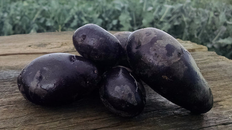Scott's Potatoes:  Purple Fiesta (/lb)