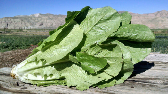 Scott's Lettuce: Romaine (/item)
