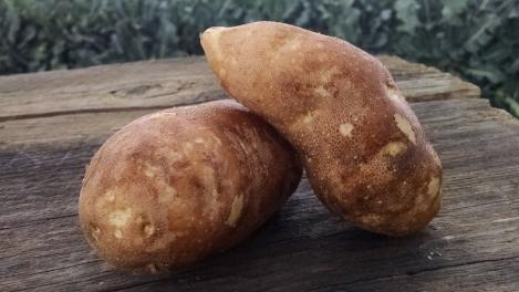 Scott's Potatoes: Russet (/lb)