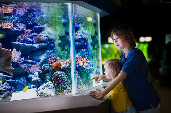 How to Make Aquarium Décor and Accessories