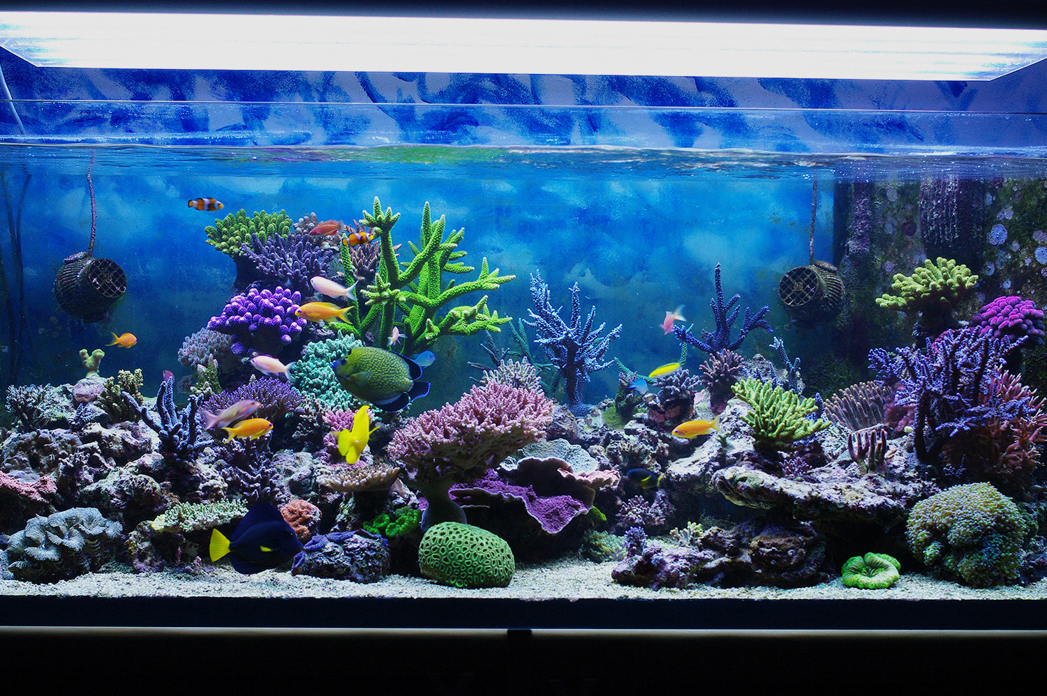 Essential Aquarium Décor and Accessories