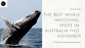 The Best Whale Watching Spots in Australia this November