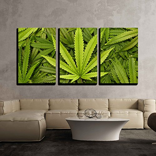3 Piece Canvas Wall Art - Big Marijuana Leaf Close Up with a Textured Background