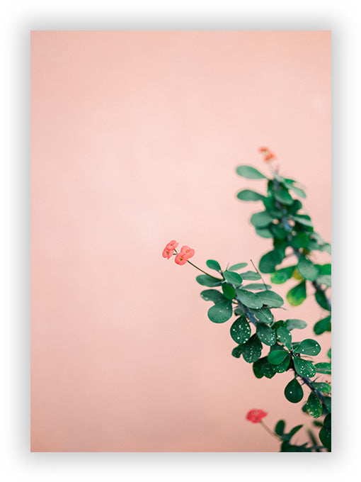 Green on pink II